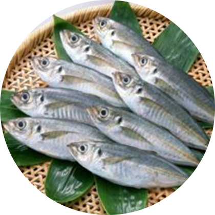 image - 瀨付竹莢魚