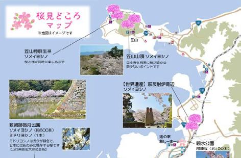 画像:桜見どころマップの表紙