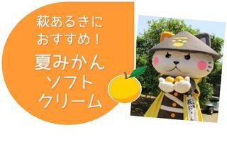 画像:おすすめ!萩の夏みかんソフトクリーム
