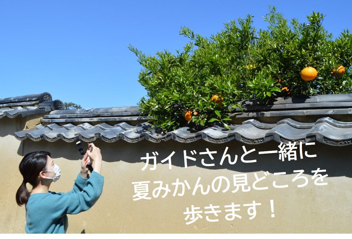画像:萩といえば夏みかん!夏みかんをめぐるまち歩き