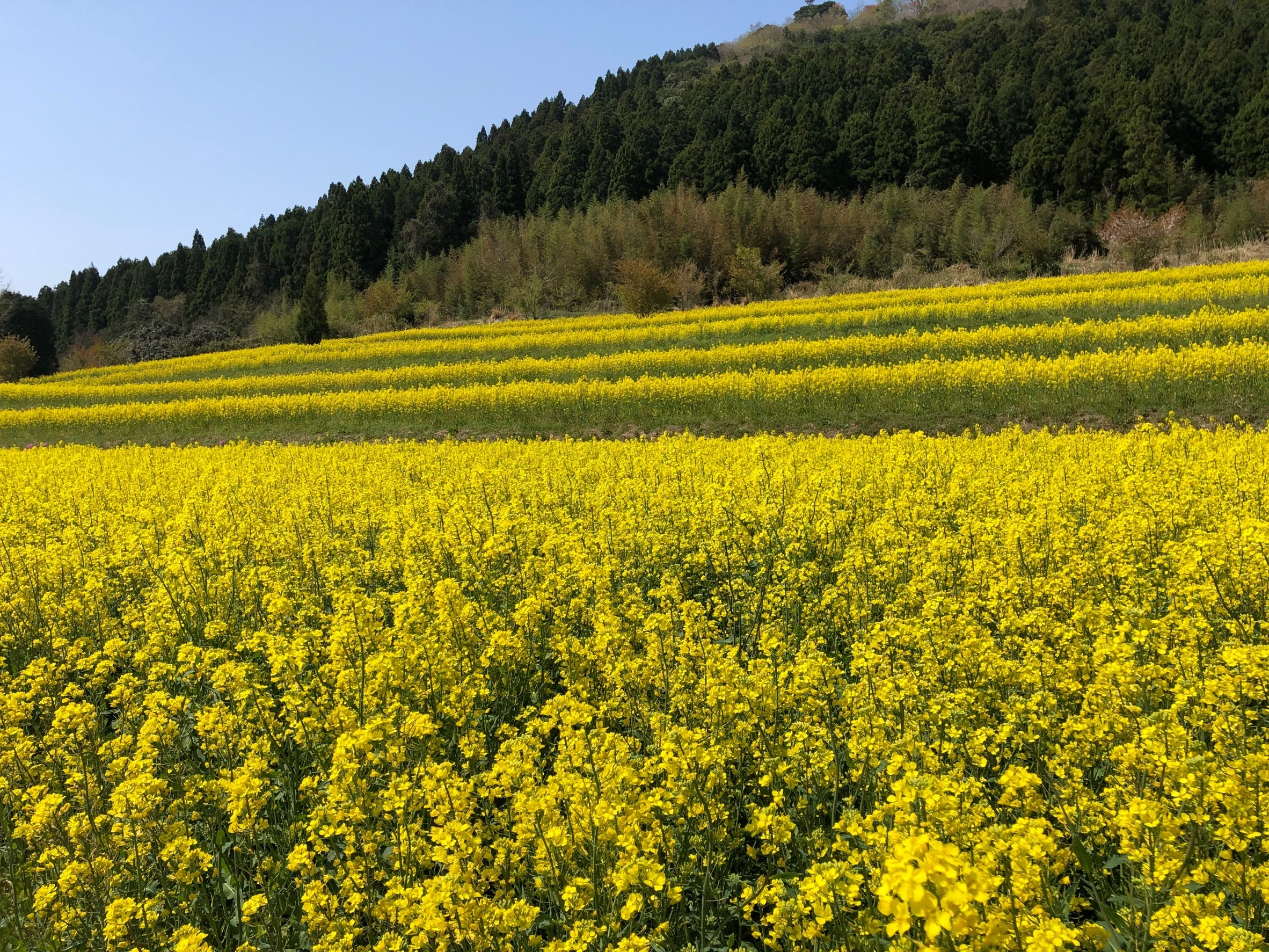 画像:萩の花めぐりスポット(開花状況)2021