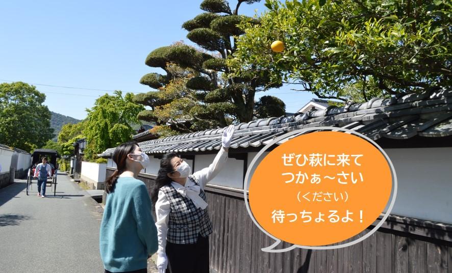 画像:萩市観光協会ガイドとめぐる萩のまち
